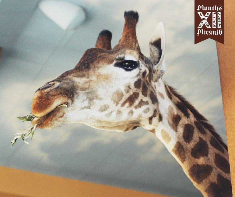 Билет в зоопаркXII Месяцевсо скидкой 33%!