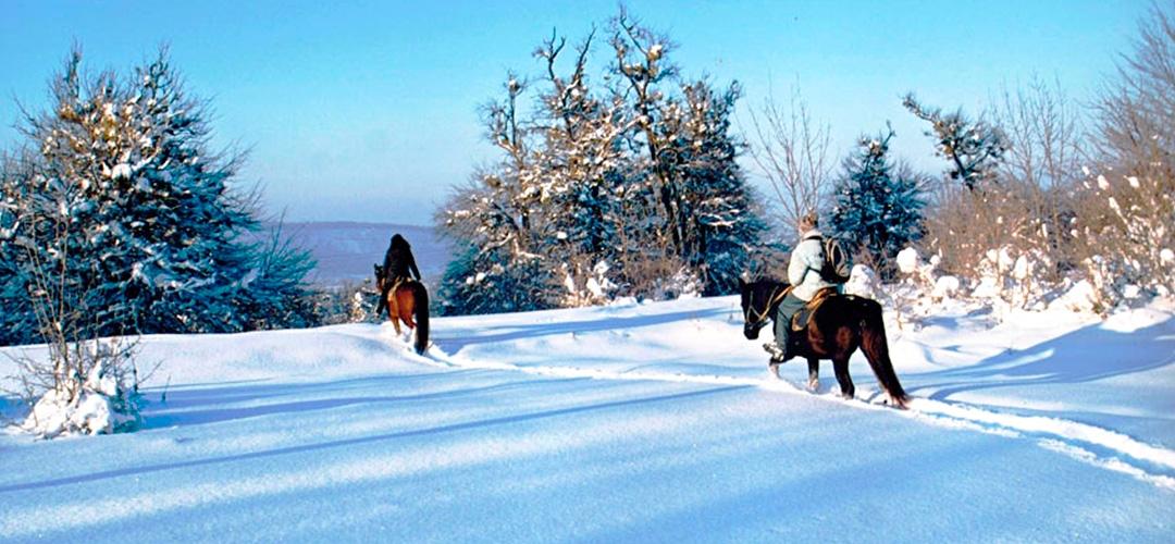 Прогулки на лошадях всего за 200грн.!